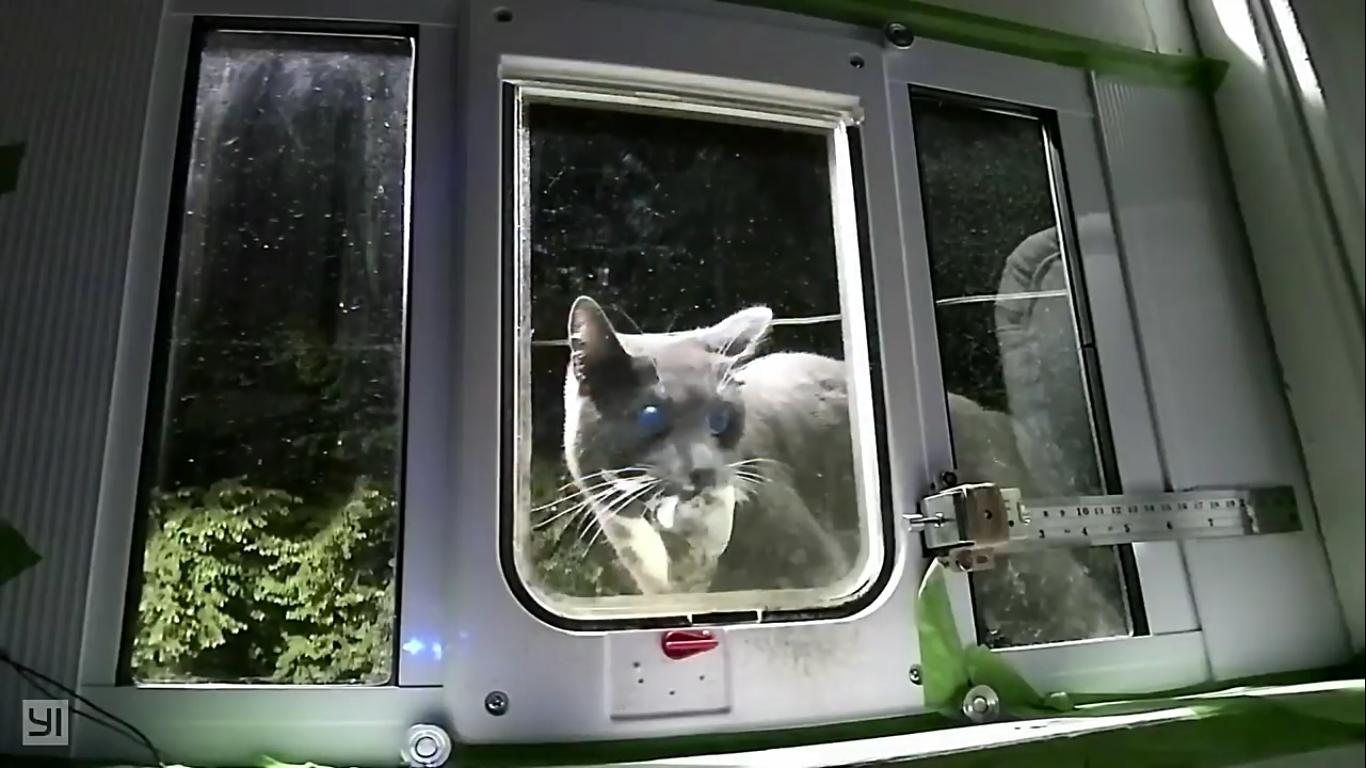 Инженер Amazon создал блокирующее устройство с ИИ, которое не пускает в дом кота с уличной добычей - 5