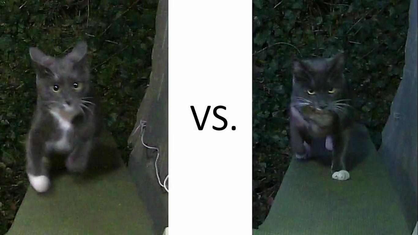 Инженер Amazon создал блокирующее устройство с ИИ, которое не пускает в дом кота с уличной добычей - 9