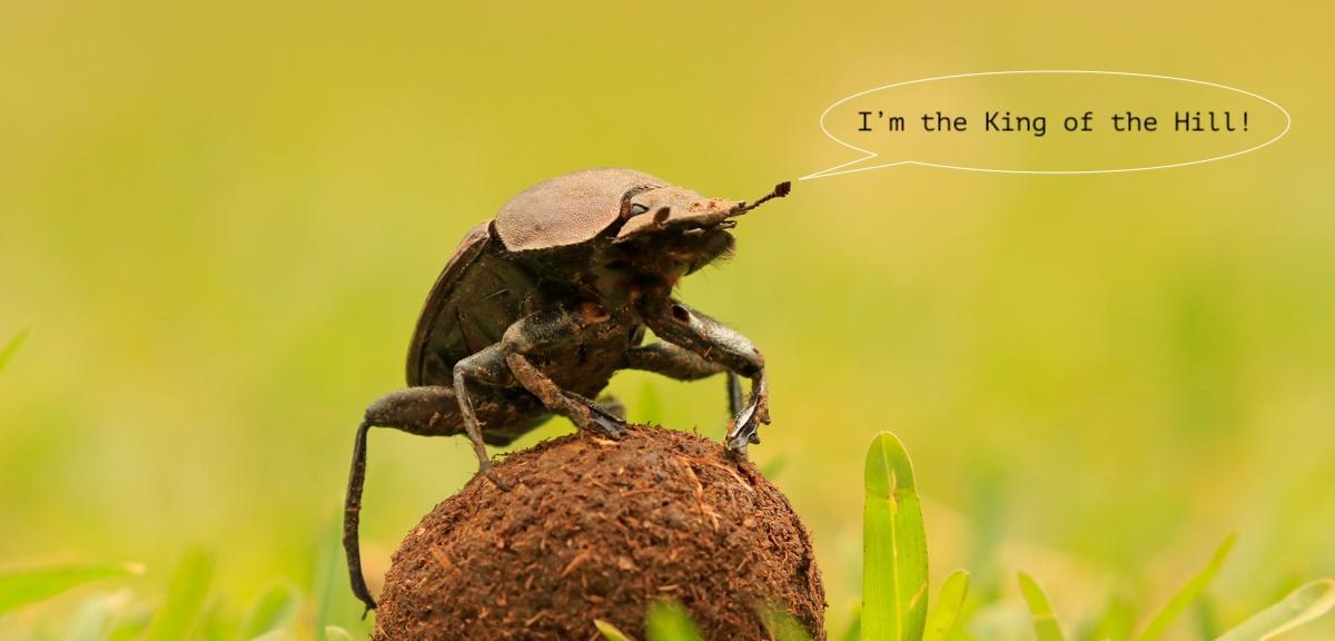 GPS для навозного жука: мультимодальная система ориентирования - 1