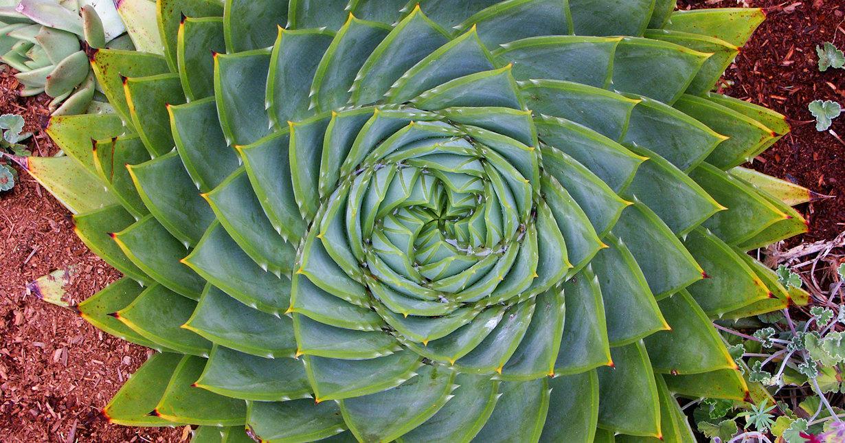 Ученые доказали, что у растений нет сознания