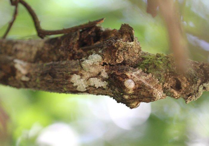 Найдите геккона на фотографии: искусство маскировки