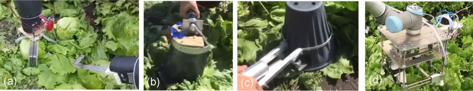 Агро-робот с ИИ научился аккуратно собирать с грядки только созревший салат - 16