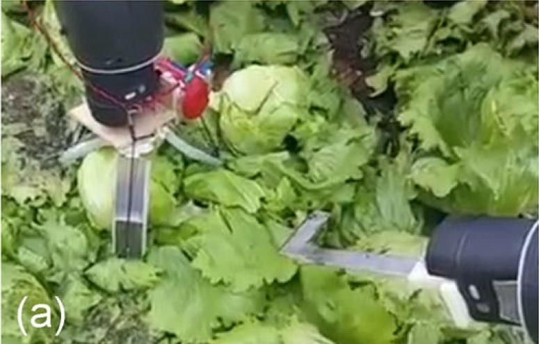 Агро-робот с ИИ научился аккуратно собирать с грядки только созревший салат - 17