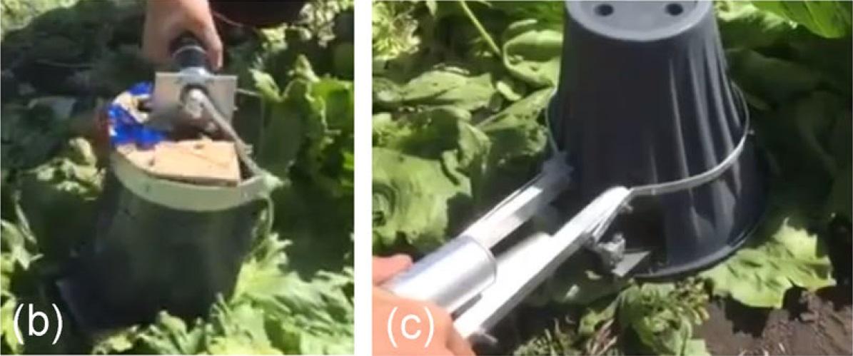 Агро-робот с ИИ научился аккуратно собирать с грядки только созревший салат - 18