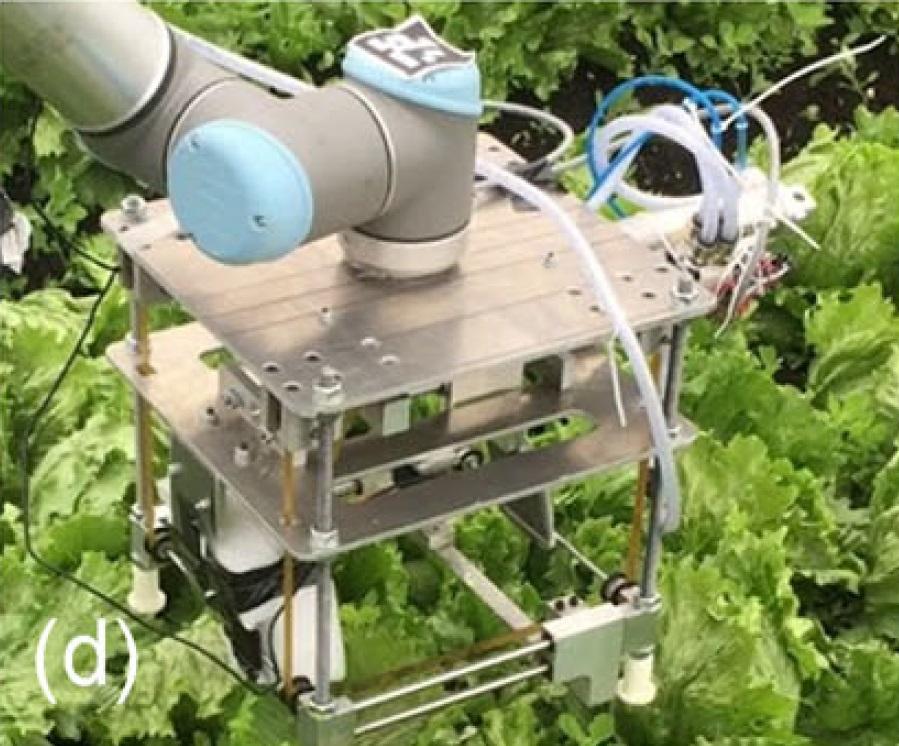 Агро-робот с ИИ научился аккуратно собирать с грядки только созревший салат - 19