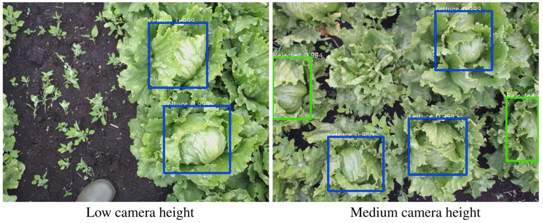 Агро-робот с ИИ научился аккуратно собирать с грядки только созревший салат - 27