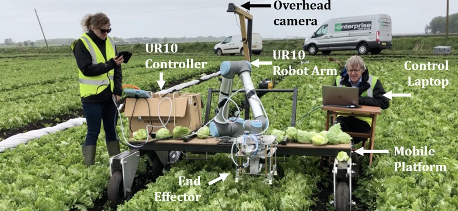 Агро-робот с ИИ научился аккуратно собирать с грядки только созревший салат - 6