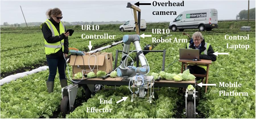 Агро-робот с ИИ научился аккуратно собирать с грядки только созревший салат - 1