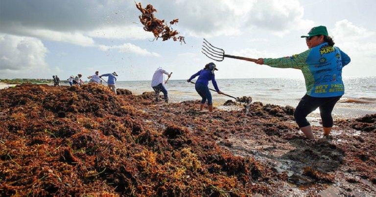 Аномальный рост водорослей обеспокоил ученых: зеленое вторжение