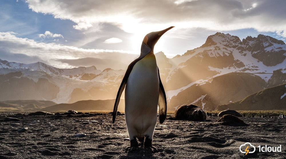 Исследование: Linux — все еще самая популярная ОС в облаке - 1