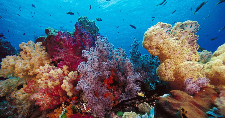 Наши фекалии и нечистоты убивают кораллы