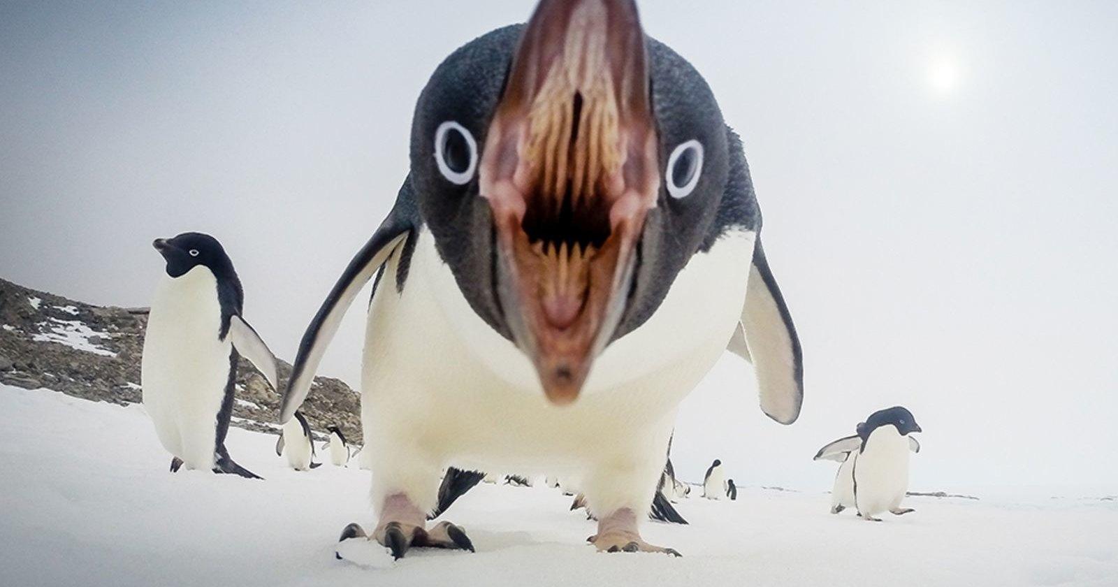 Кровь антарктических птиц рассказала о глобальном потеплении