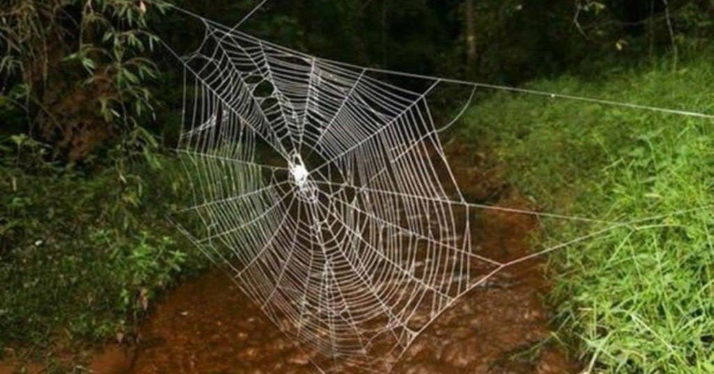 Раскрыт секрет самой прочной паутины