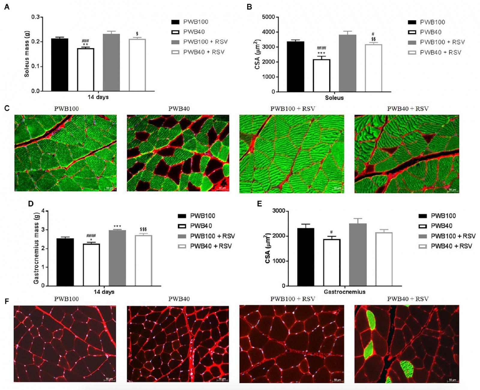 Вино и крысы: применение ресвератрола для восстановления мышц в условиях марсианской гравитации - 4
