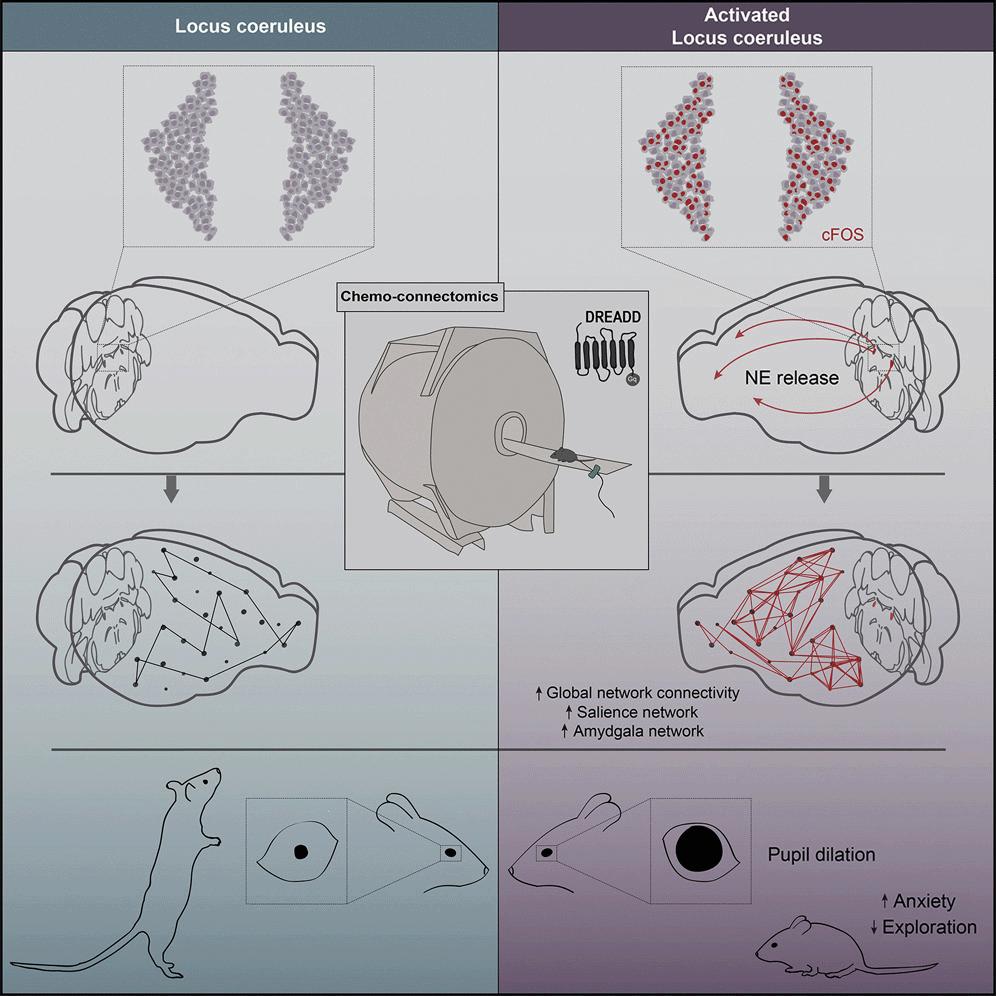 Учёные выяснили, что стресс кардинально меняет работу мозга - 1