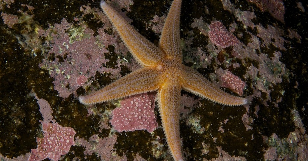 Морским звездам от человеческой любви хочется есть