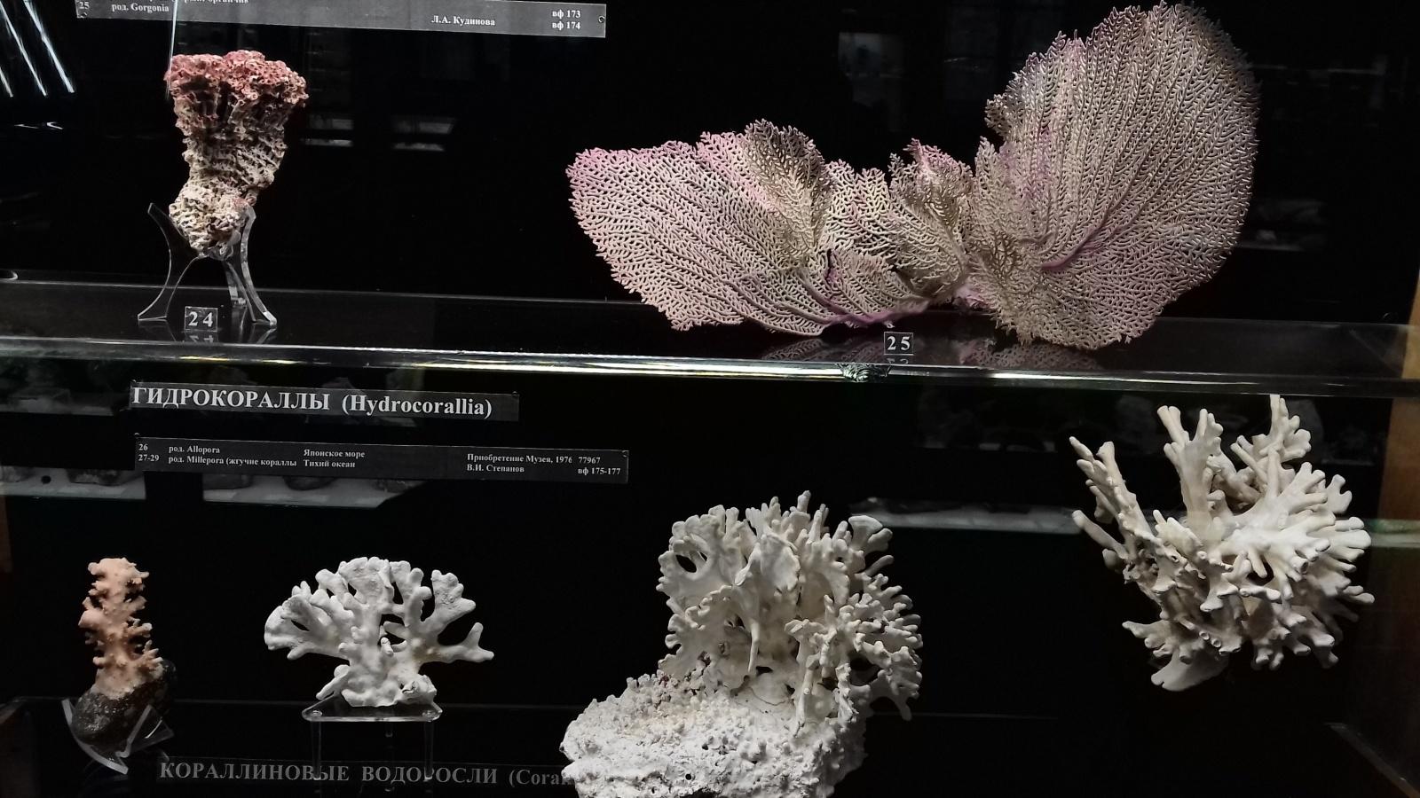 Фотоэкскурсия по Минералогическому музею имени Ферсмана - 21