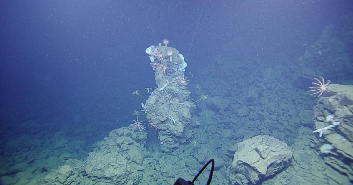 Как выглядят океанский геотермальный источник и его обитатели
