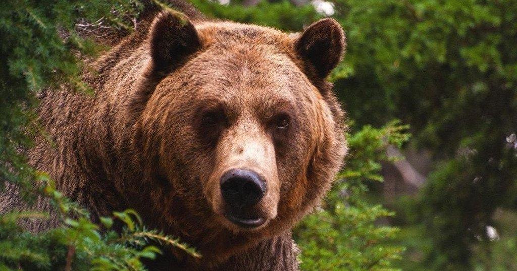 Рычавшая на медведя пенсионерка заговорит через 10 дней