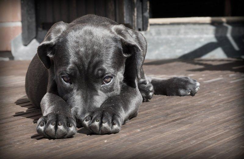 8 лайфхаков, которые должен знать каждый владелец собаки