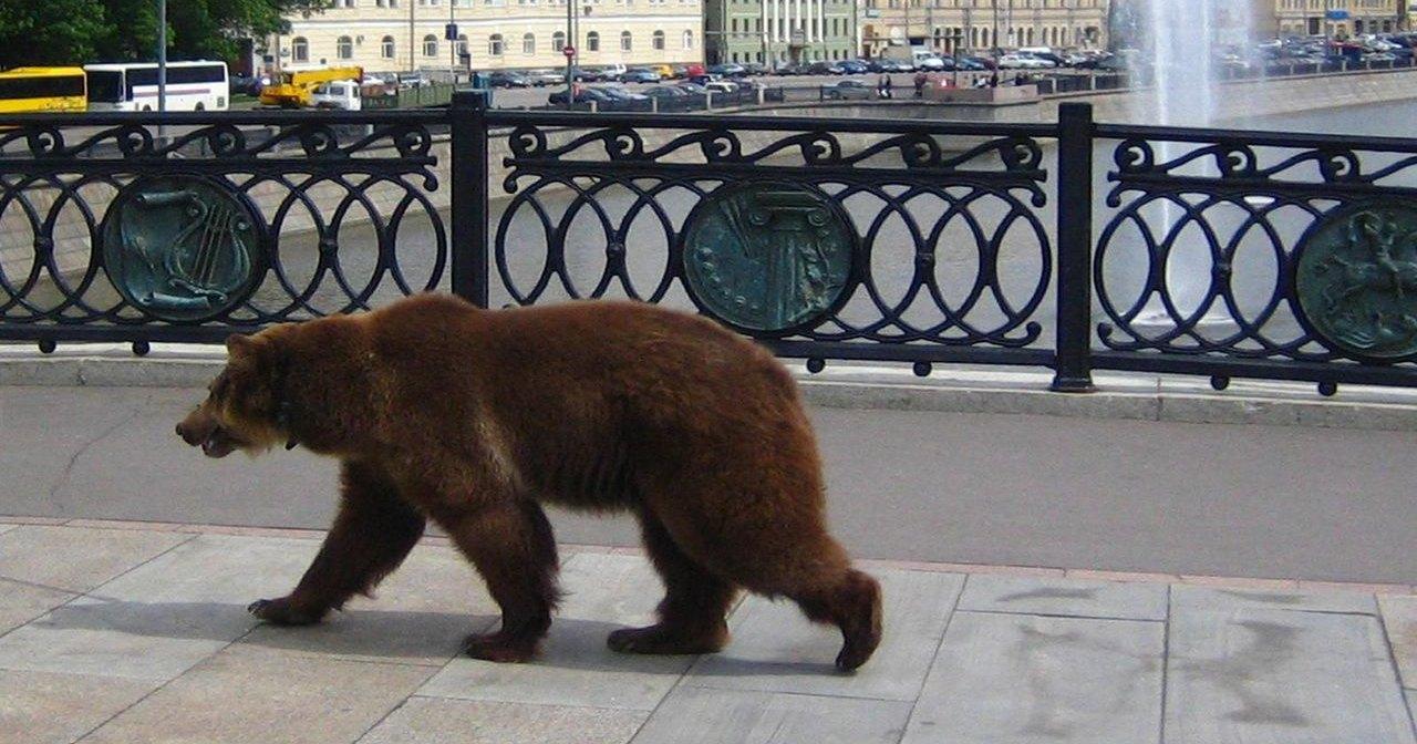 В финскую школу пришел медведь
