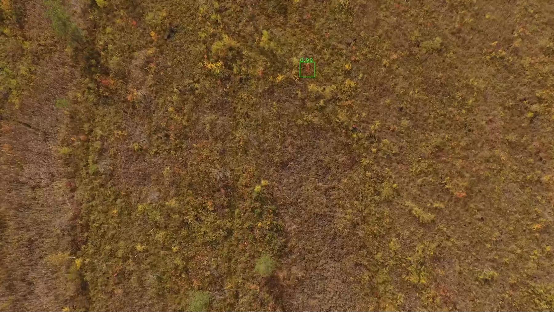 Лес не сдается технологиям поиска, но инженеры наносят ответный удар - 2