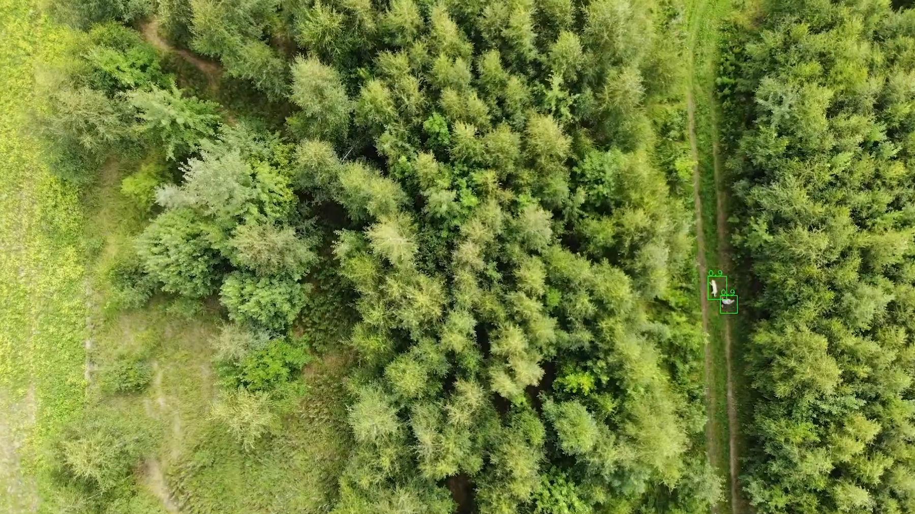 Лес не сдается технологиям поиска, но инженеры наносят ответный удар - 5