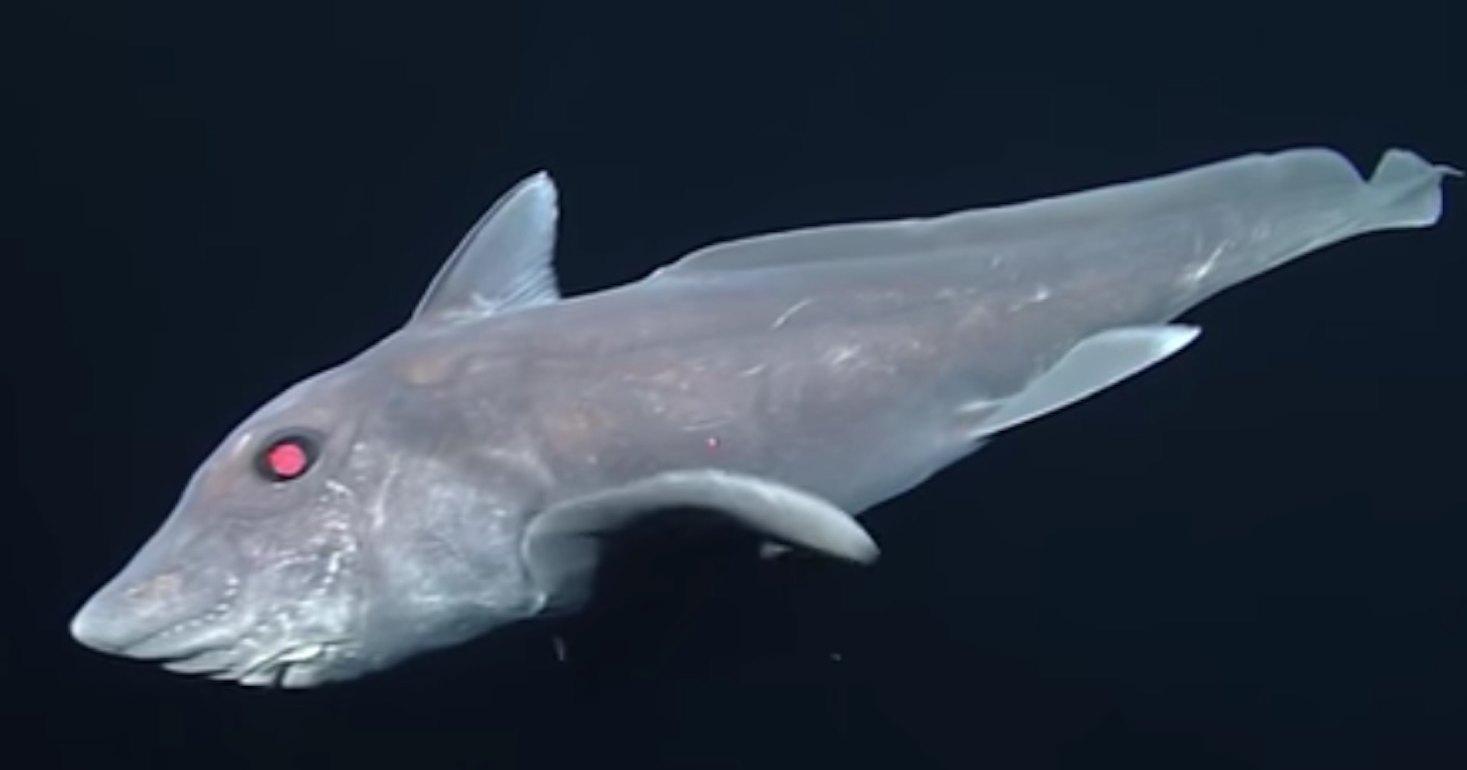 Акула-призрак. Предшественница динозавров