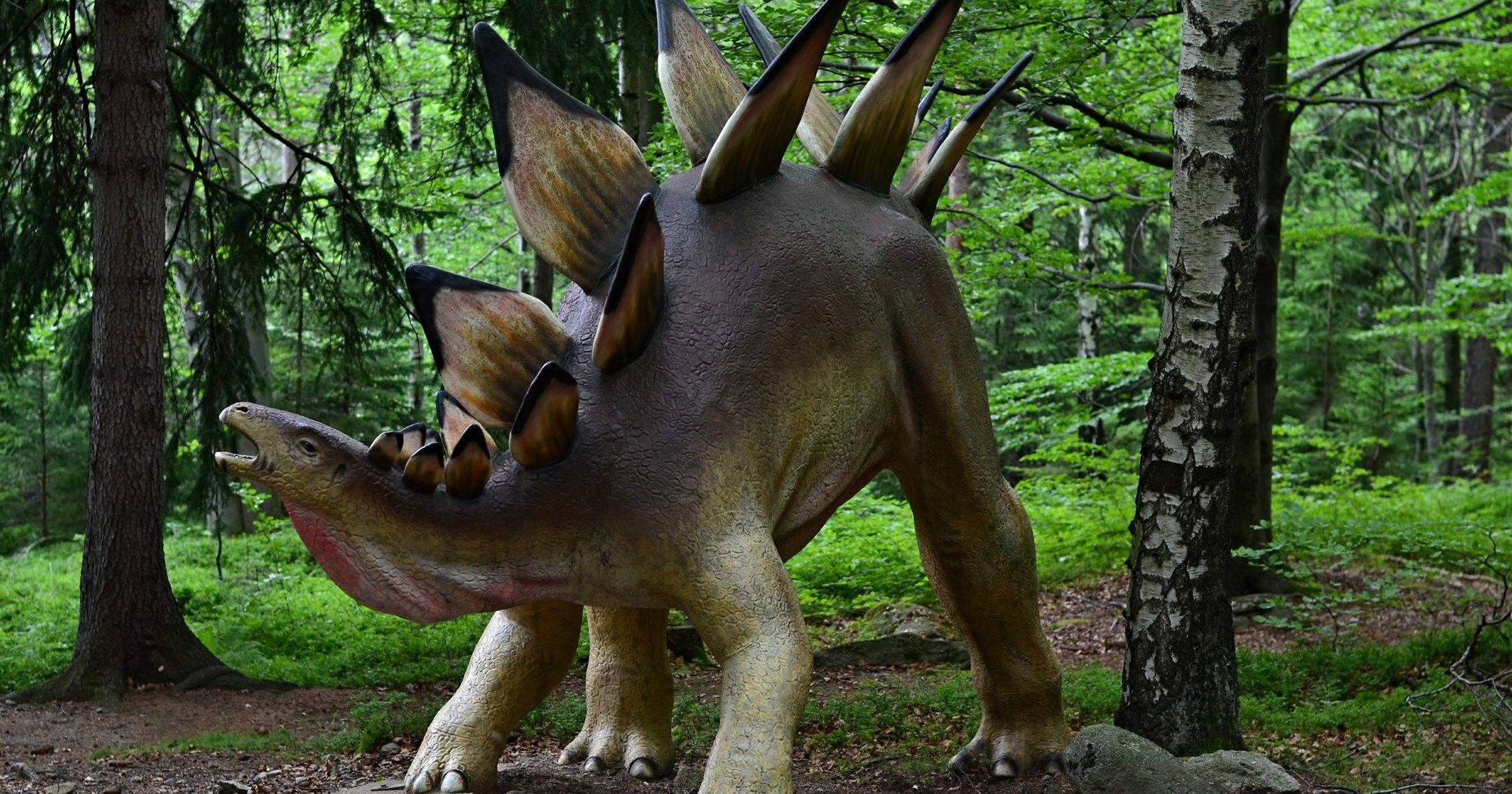 Найден самый древний стегозавр