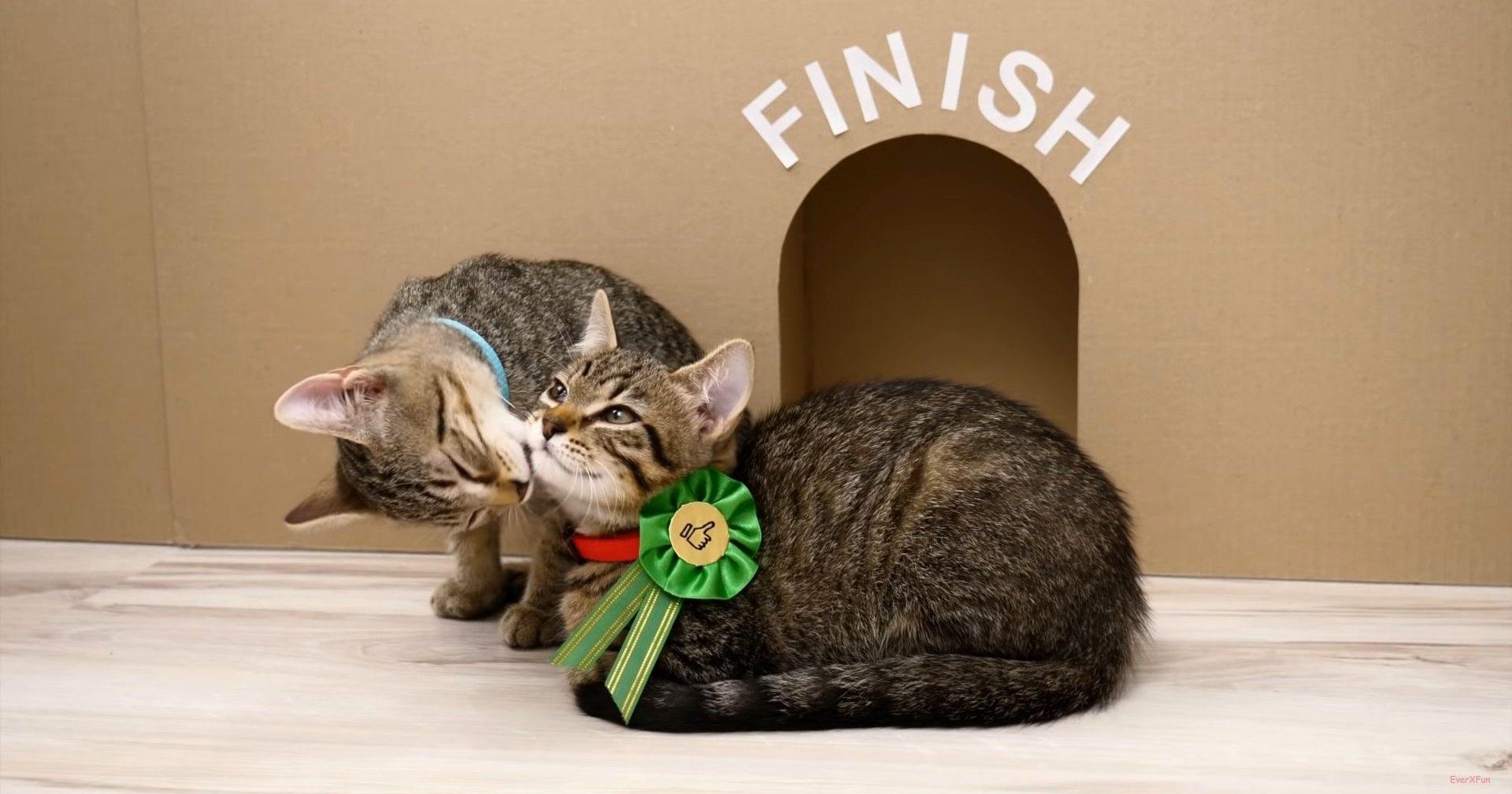 Смогут ли котята выбраться из лабиринта: самый милый эксперимент