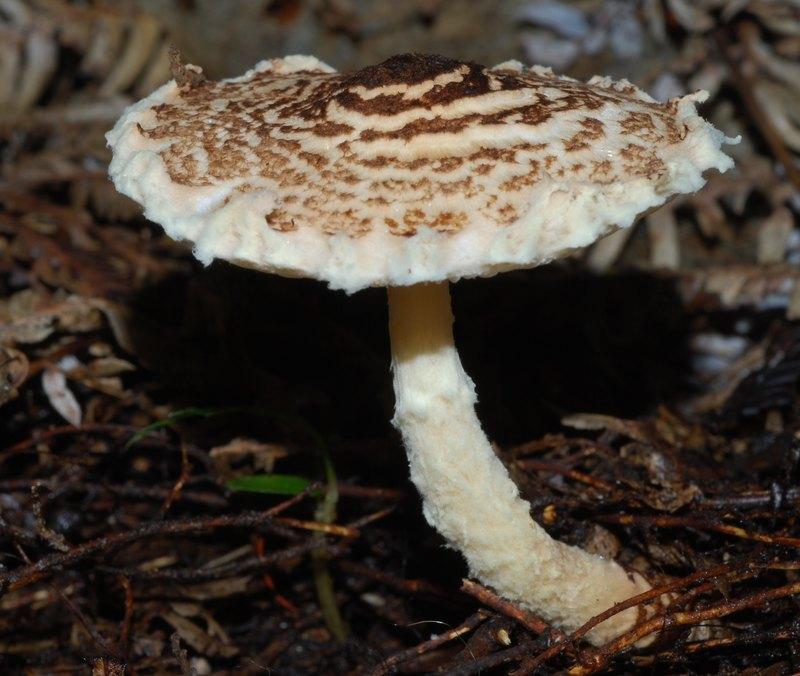 Как грибы убивают людей: состав ядов, симптомы и антидоты