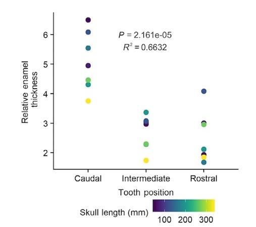 Зубная фея тут не работает: структура эмали зубов крокодилов и их доисторических предков - 12