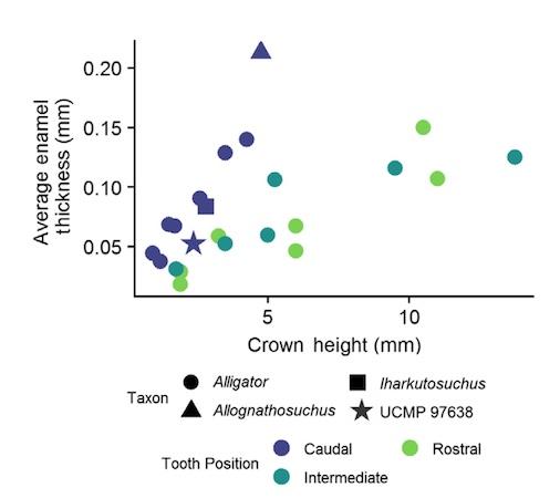 Зубная фея тут не работает: структура эмали зубов крокодилов и их доисторических предков - 13