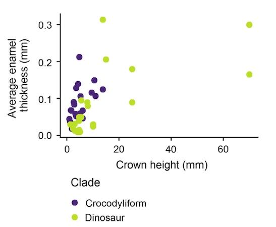 Зубная фея тут не работает: структура эмали зубов крокодилов и их доисторических предков - 14