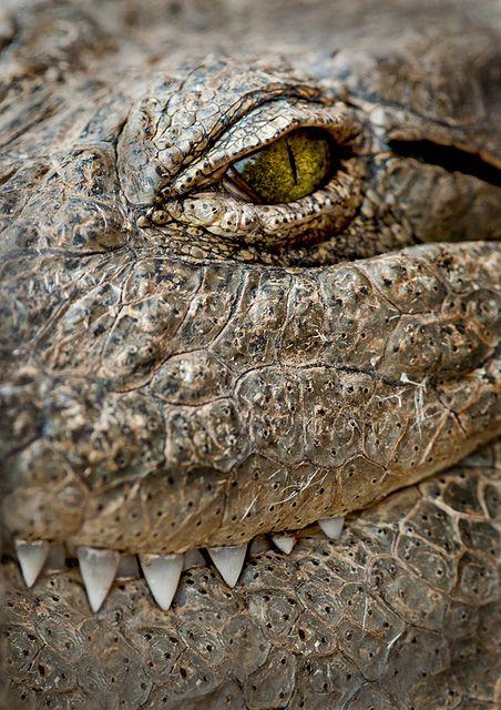 Зубная фея тут не работает: структура эмали зубов крокодилов и их доисторических предков - 3