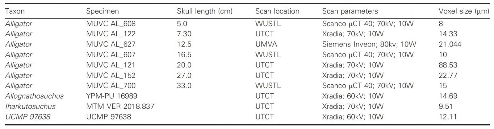 Зубная фея тут не работает: структура эмали зубов крокодилов и их доисторических предков - 7