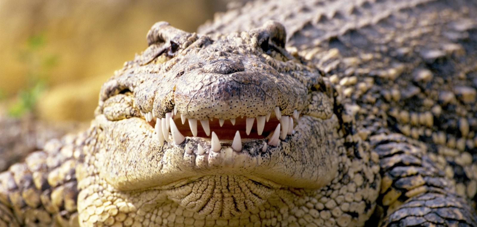 Зубная фея тут не работает: структура эмали зубов крокодилов и их доисторических предков - 1