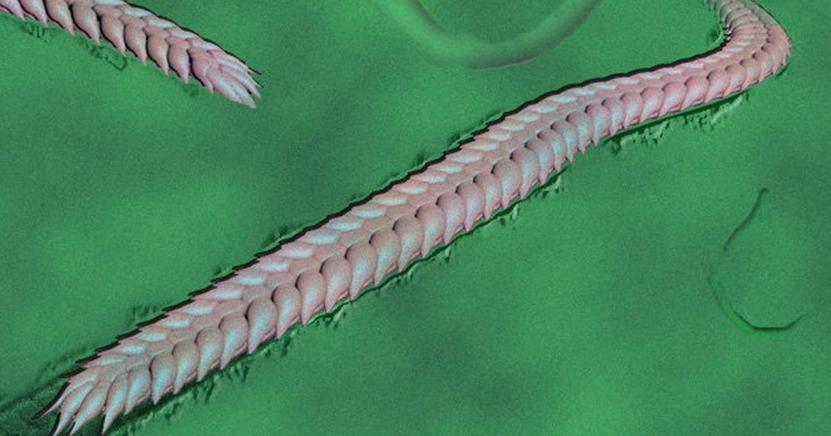 Найдено наследившее в докембрийских породах животное