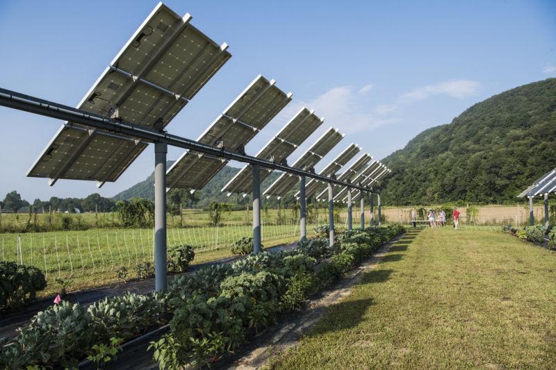 Сельское хозяйство и солнечные панели — win-win стратегия для энергетиков и фермеров - 1