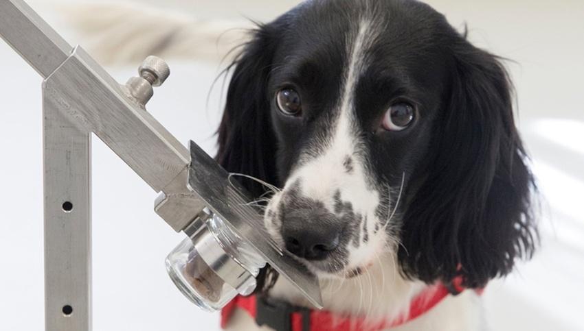 Эпопея по созданию робота с нюхом собаки - 1
