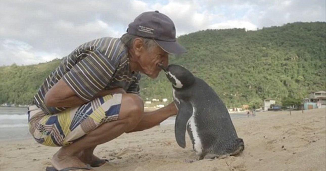 Дружба человека с животными: самые мимимишные эпизоды
