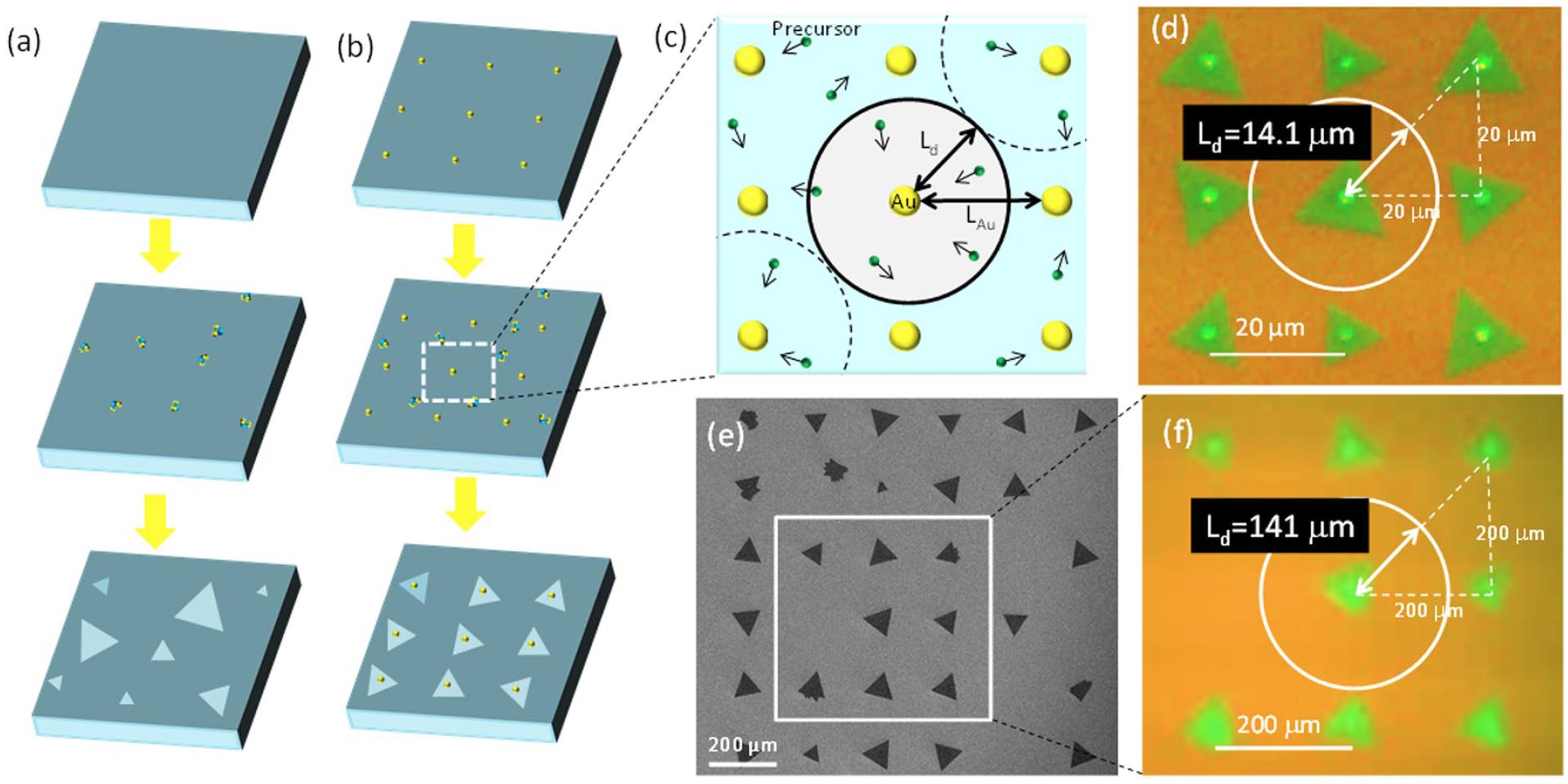 Дихалькогениды переходных металлов: раскрытие секретов динамики роста кристаллов WS2 - 2