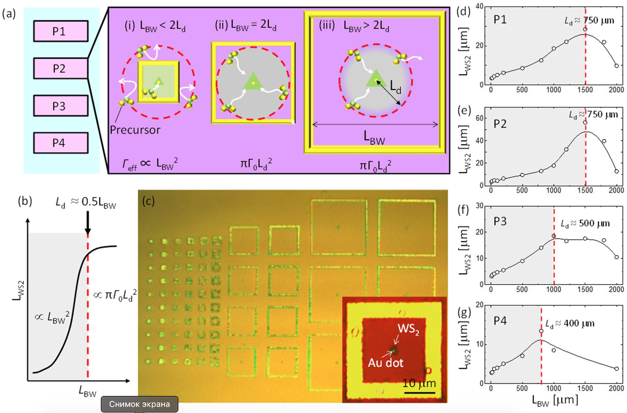 Дихалькогениды переходных металлов: раскрытие секретов динамики роста кристаллов WS2 - 3