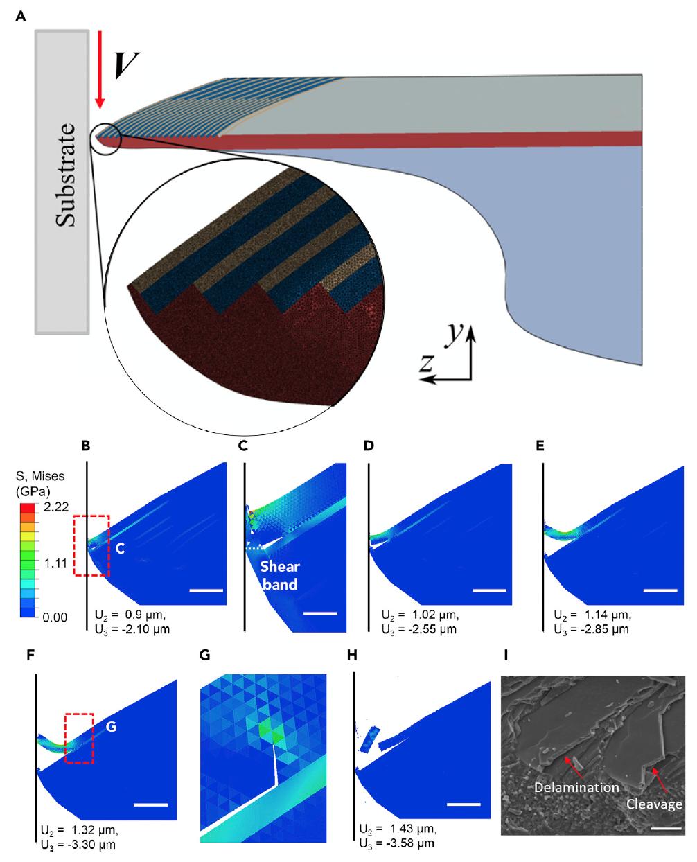 Колючие и острые, куда ни посмотри: механизм самозаточки зубов морских ежей - 8