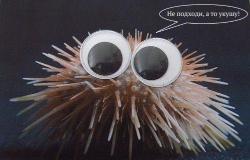 Колючие и острые, куда ни посмотри: механизм самозаточки зубов морских ежей - 1