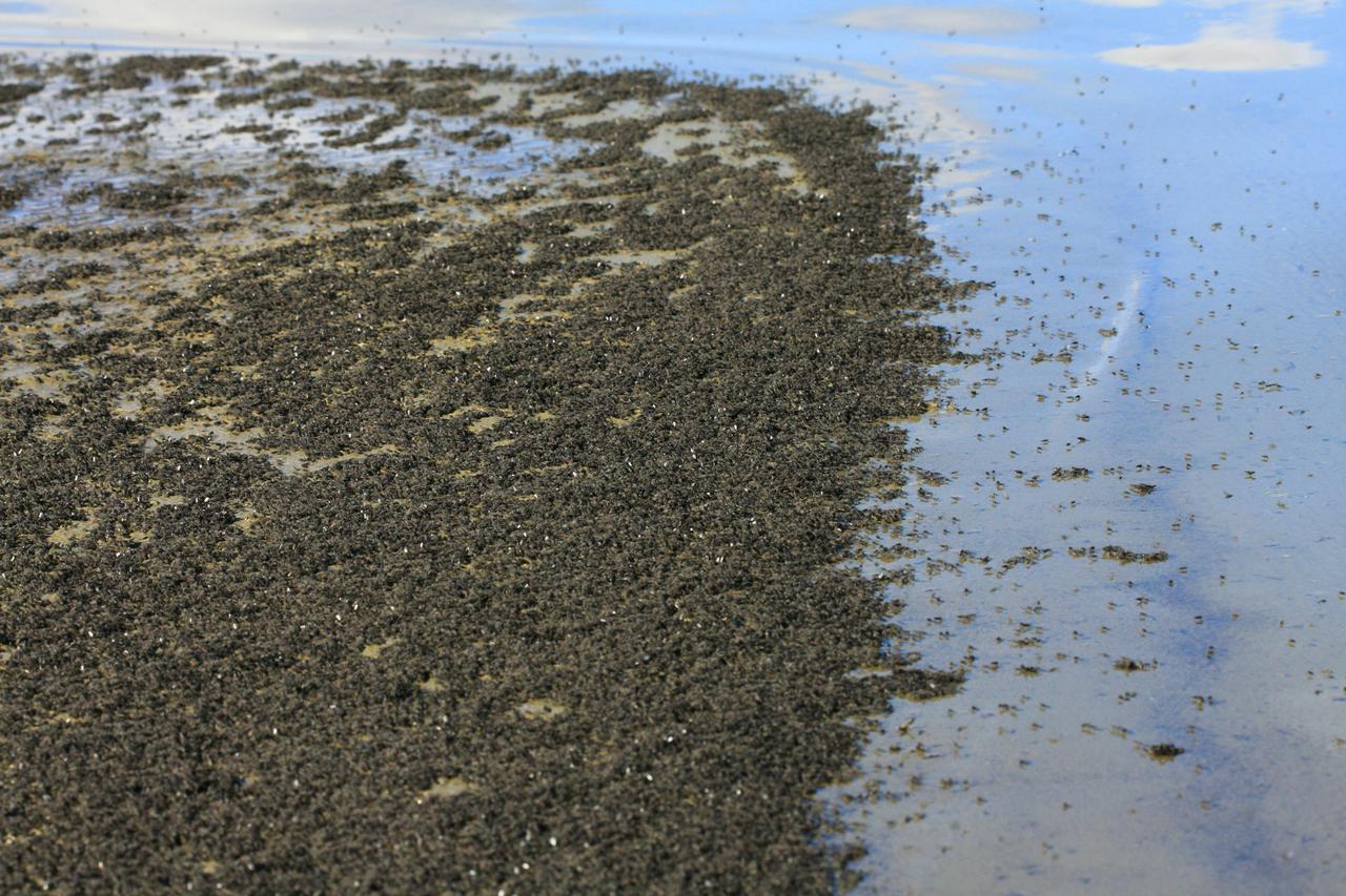 Нематоды-экстремалы из озера Моно: искупаться в мышьяке и выжить - 4