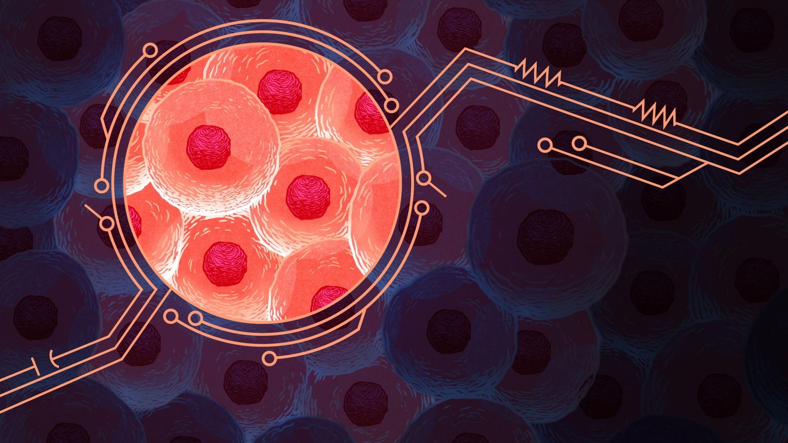 Математика раскрывает секреты обратной связи живых клеток - 1