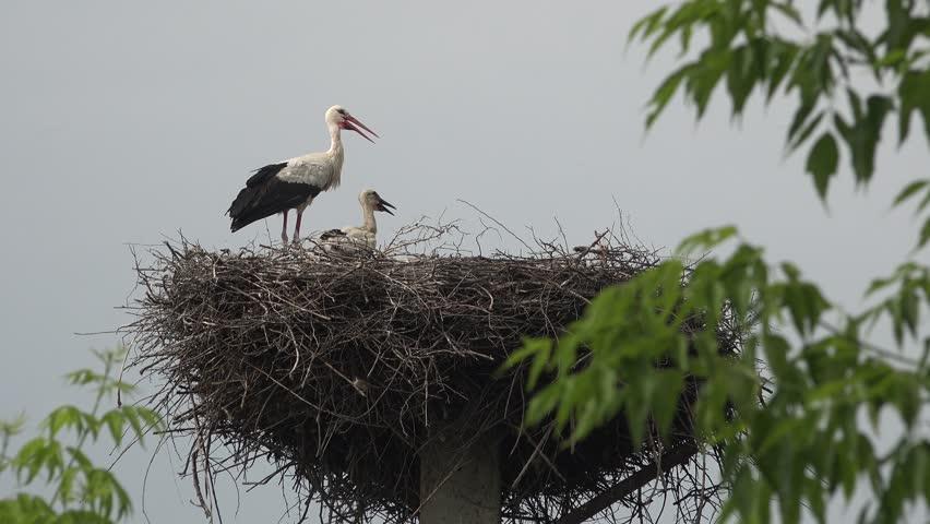 Генетика любви: межполовой конфликт как основа сотрудничества в парах моногамных птиц - 3