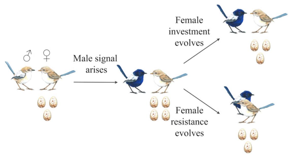 Генетика любви: межполовой конфликт как основа сотрудничества в парах моногамных птиц - 5