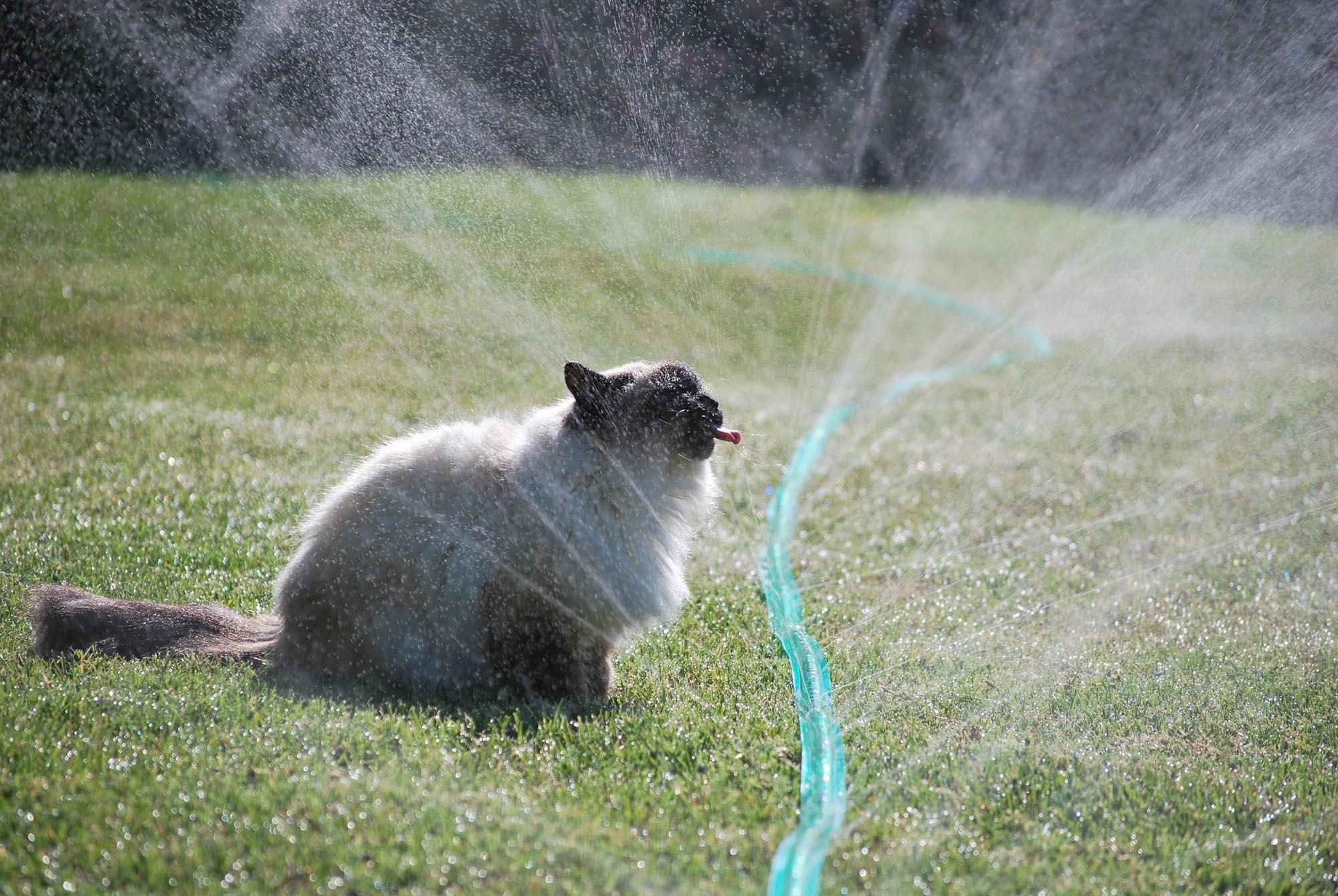 Гоним кота: как заставить котов не справлять нужду на лужайке у дома? - 2